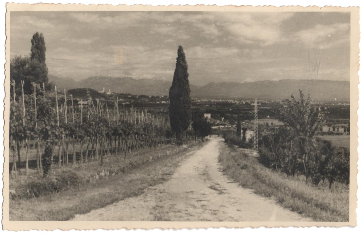 vigne_Old